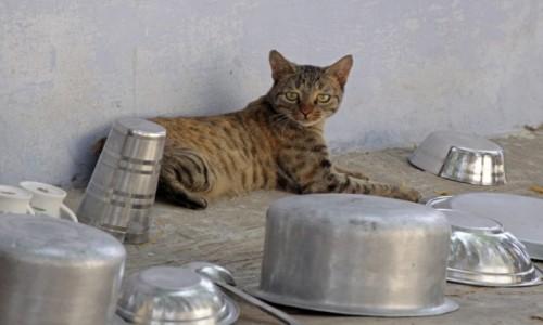 Zdjecie INDIE / Uttar Pradesh / Jaipur / Zwierzęta Indii 11