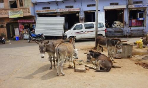 Zdjecie INDIE / New Delhi / New Delhi / Ośle rondo