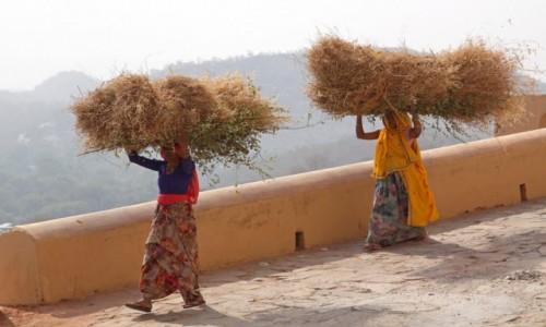 Zdjęcie INDIE / Radzasthan / Jaipur / Rozpałka