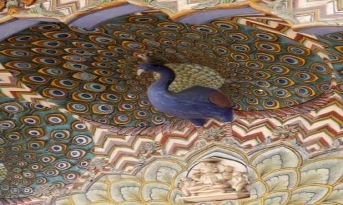 Zdjecie INDIE / Radzasthan / Jaipur / Jaipur 29