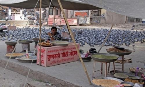 Zdjecie INDIE / Radzasthan / Jaipur / Karmnik :)