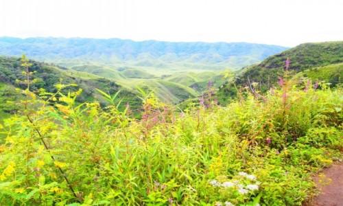 Zdjecie INDIE / Nagaland / Dzukou Valley / Dolina Dzukou