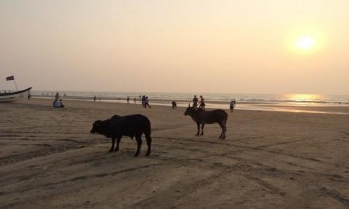 Zdjecie INDIE / Goa / Arambol / Plaża