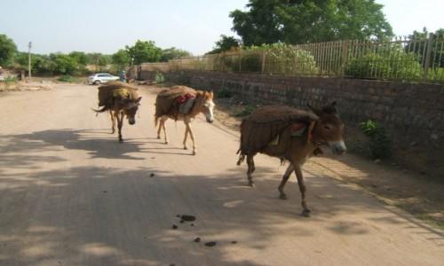 Zdjecie INDIE / Madhya Pradeś / Khajuraho / Osiołki niosące glinę