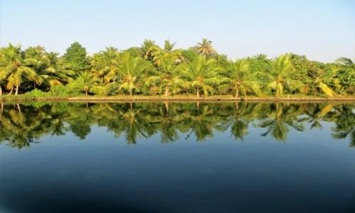 Zdjęcie INDIE / Kerala / Keralskie rozlewiska / Mijamy palmy