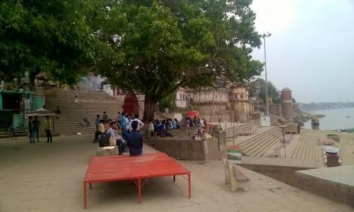 Zdjecie INDIE / Uttar Pradeś / Varanasi / Na ghacie Assi pod świętym figowcem
