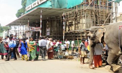 Zdjęcie INDIE / Tamilnadu / .... / Świątynia w remoncie a pielgrzymów moc