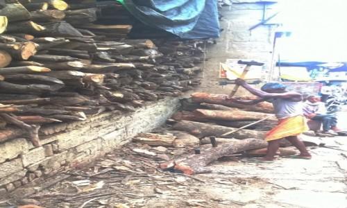 INDIE / Uttar Pradeś / Varanasi / Praca przy drewnie na stosy