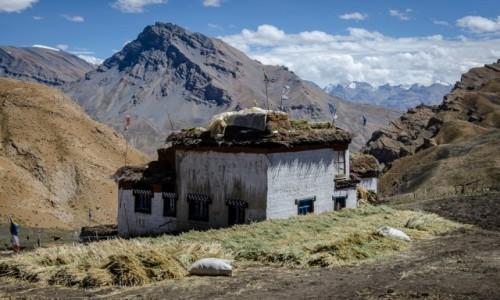 Zdjęcie INDIE / Himachal Pradesh / Demul / żniwa...