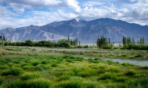 Zdjęcie INDIE / Ladakh / Thiksey  / dywan...