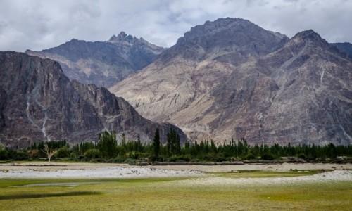 Zdjęcie INDIE / Ladakh / Dolina Nubry  / kontrasty...