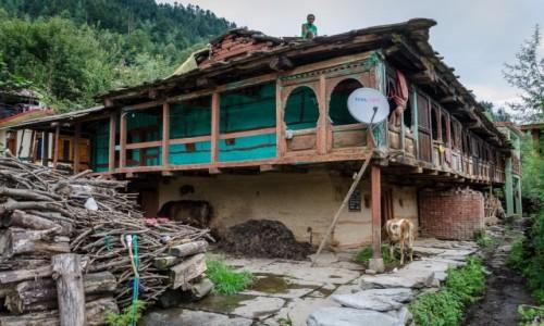 Zdjecie INDIE / Himachal Pradesh / Old Manali / popatrzę sobie...