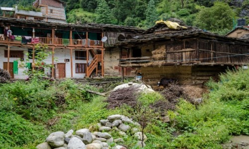 Zdjecie INDIE / Himachal Pradesh / Old Manali / obejście...