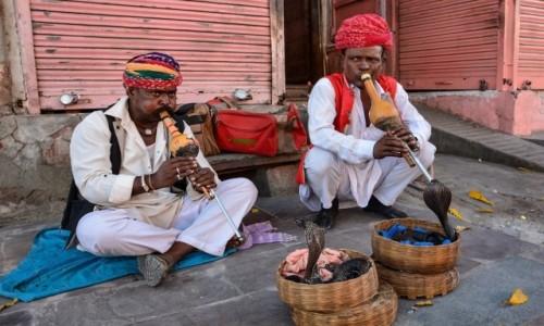 Zdjecie INDIE / Radżastan / Dżajpur / Dżajpur