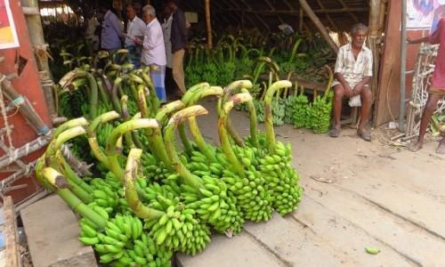 Zdjęcie INDIE / Tamilnadu / Tiruvannamalaj / sklep z bananami