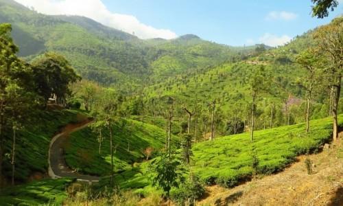 Zdjęcie INDIE / Tamilnadu / Góry Niebieskie / widoczek