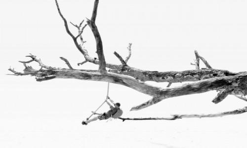 Zdjecie INDIE / Andaman Islands / Havelock / Na plaży drzewa Andamanów