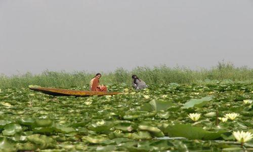 Zdjecie INDIE / Kashmir / Dal lake / Dal lake