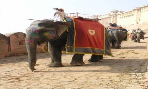 Zdjecie INDIE / Rajasthan / Amber / Słonie w Fort Amber