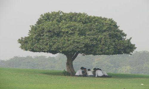Zdjęcie INDIE / brak / dehli / Odpoczynek pod drzewem