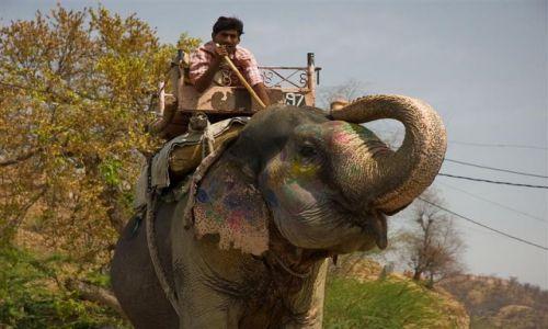 Zdjecie INDIE / Radżastan / Jajphur / Poganiacz słoni na ulicach Jajphuru