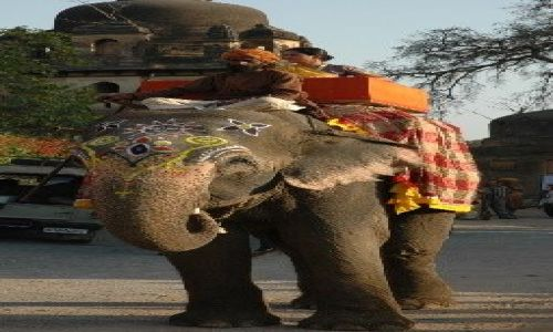 Zdjecie INDIE / Madhya Pradesh / Orcha / Przejażdżka