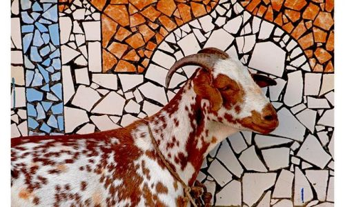 INDIE / Kashmir / �rinagar / Mozaika z koz�