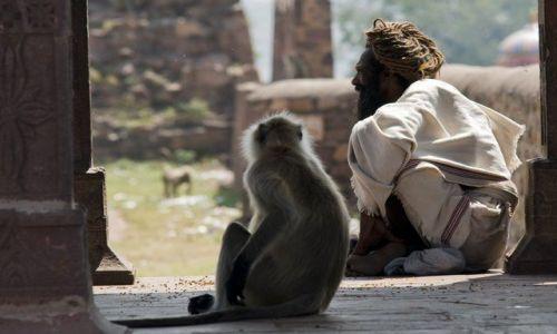 Zdjecie INDIE / brak / Ranthambhore / Ssaki :)