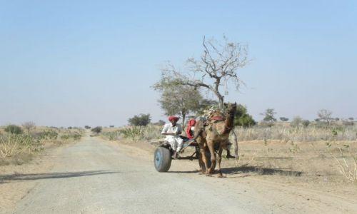 Zdjecie INDIE / Rajastan / okolice Barmer / pustynia Thar