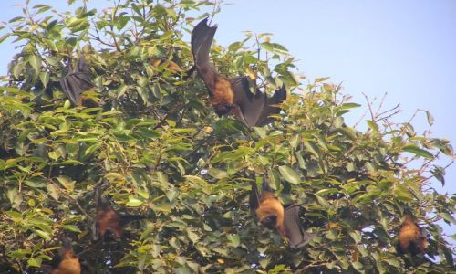 Zdjecie INDIE / brak / park narodowy Bharatpur / Fruit birds