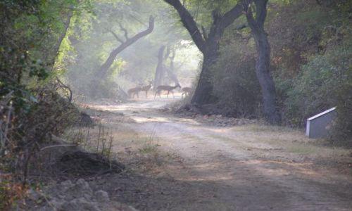 Zdjecie INDIE / brak / park narodowy Bharatpur / uchwycone w kad