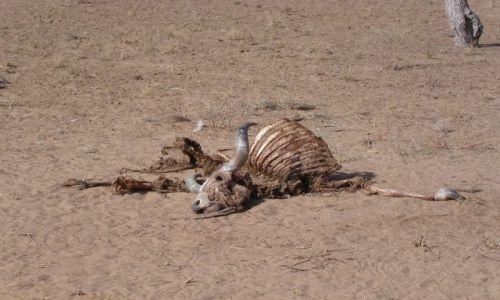 Zdjecie INDIE / brak / gdzieś na pustyni Thar / gdzieś na pustyni Thar 2
