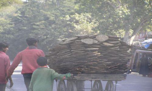 Zdjecie INDIE / Rajastan / w drodze do Sikhandry / transport opału