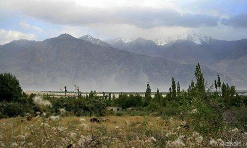 Zdjecie INDIE / Ladakh / nubra / trzy kroki od Nubra Valley