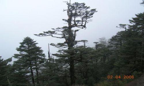 Zdjęcie INDIE / Bengal Zachodni / trekking Sandakphu / Sandakphu (3660 m.npm)