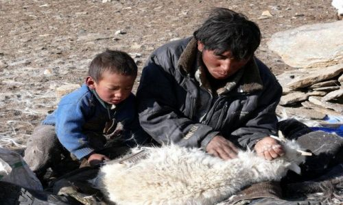 Zdjecie INDIE / Himalaje / Ladakh / Zajęcie pasterza
