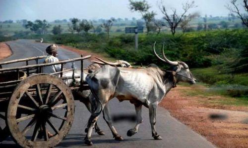 Zdjęcie INDIE / Karnataka / Hubli / A to Indie właśnie