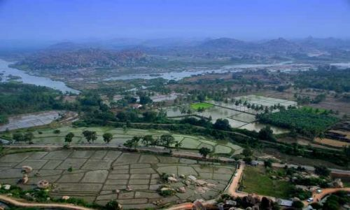 INDIE / Karnataka / Hampi / Pola ryżowe