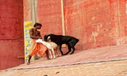Zdjecie INDIE / północ / Varanasi / przyłapani na gorącym uczynku