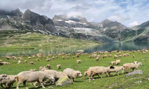 Zdjecie INDIE / Jammu i Kaszmir / Kaszmir / Kaszmir - gdzie niebo spotyka ziemie