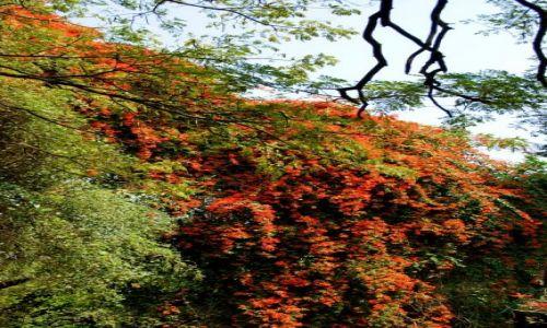 Zdjęcie INDIE / Bengalore / Bengalore / Kwiaty