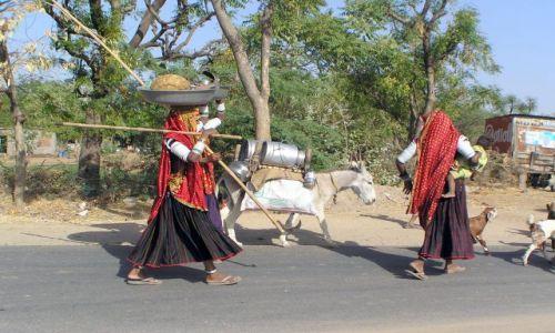 Zdjęcie INDIE / Gujarat / w drodze między Mehsaną a Ahmadabadem / wędrówka koczowników Rabari