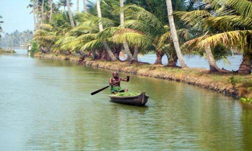 Zdjęcie INDIE / -Kerala / kanały między Kochin a Alapuzzha / transport trawy