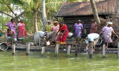 Zdjęcie INDIE / -Kerala / kanały między Kochin a Alapuzzha / lokalna ludność pracująca przy pogłębianiu kanału