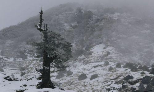 Zdjęcie INDIE / Sikkim / Gangtok / Przedwiośnie w Himalajach