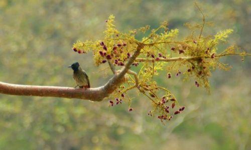 Zdjęcie INDIE / Indore / Indore / Ptok