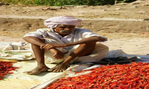 Zdjęcie INDIE / Godra / Godra / Paprykowy biznes
