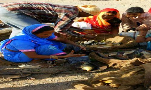 Zdjęcie INDIE / Gondra / Gondra / Ryby  świeże