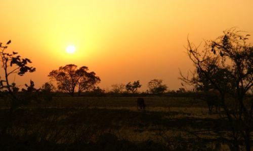 Zdjęcie INDIE / Mandi / Mandi / Pastwisko