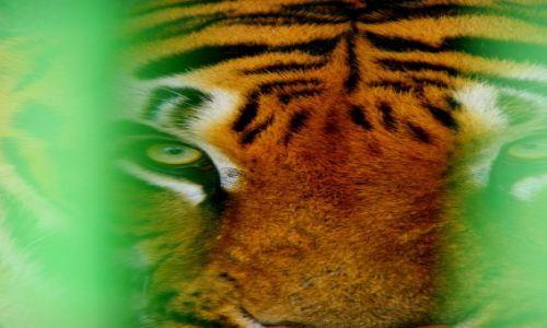 Zdjęcie INDIE / Indore / Indore / Tajger